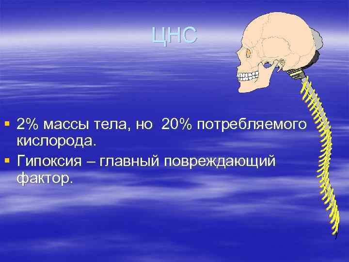ЦНС § 2% массы тела, но 20% потребляемого кислорода. § Гипоксия – главный повреждающий