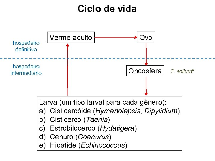 Ciclo de vida hospedeiro definitivo hospedeiro intermediário Verme adulto Ovo Oncosfera T. solium* Larva