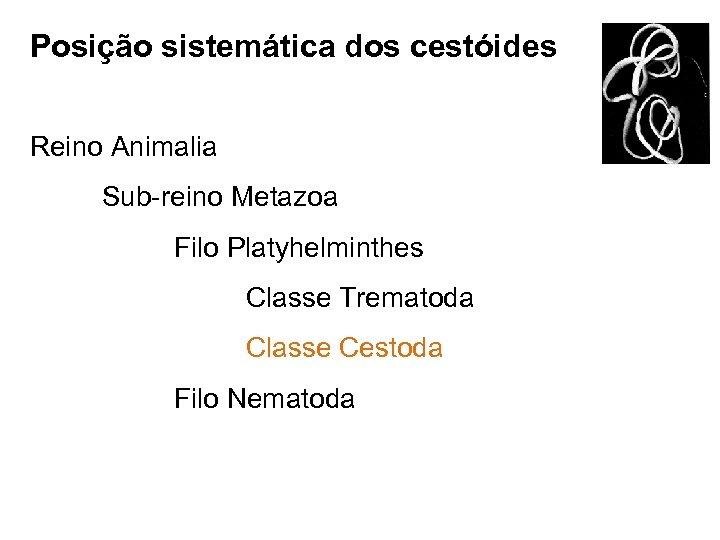 Posição sistemática dos cestóides Reino Animalia Sub-reino Metazoa Filo Platyhelminthes Classe Trematoda Classe Cestoda