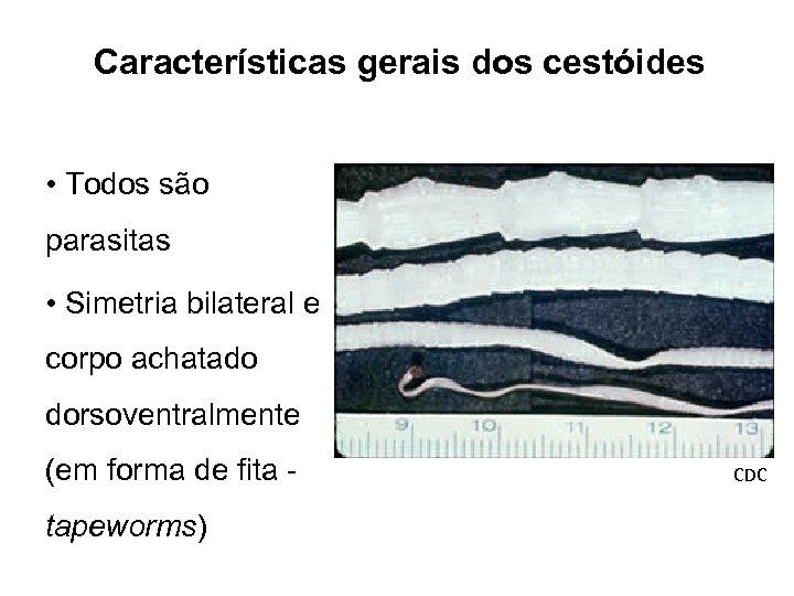 Características gerais dos cestóides • Todos são parasitas • Simetria bilateral e corpo achatado