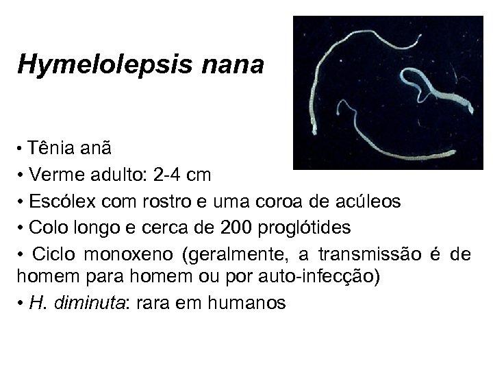 Hymelolepsis nana • Tênia anã • Verme adulto: 2 -4 cm • Escólex com