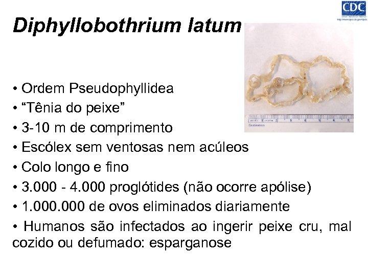 "Diphyllobothrium latum • Ordem Pseudophyllidea • ""Tênia do peixe"" • 3 -10 m de"