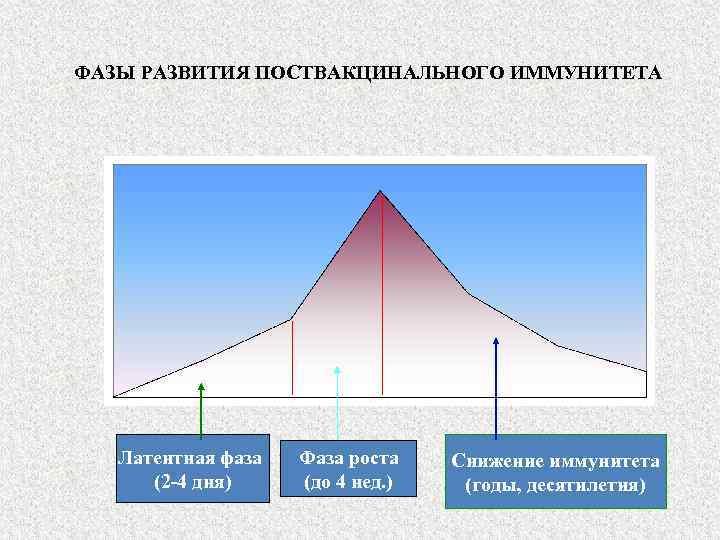 ФАЗЫ РАЗВИТИЯ ПОСТВАКЦИНАЛЬНОГО ИММУНИТЕТА Латентная фаза (2 -4 дня) Фаза роста (до 4 нед.