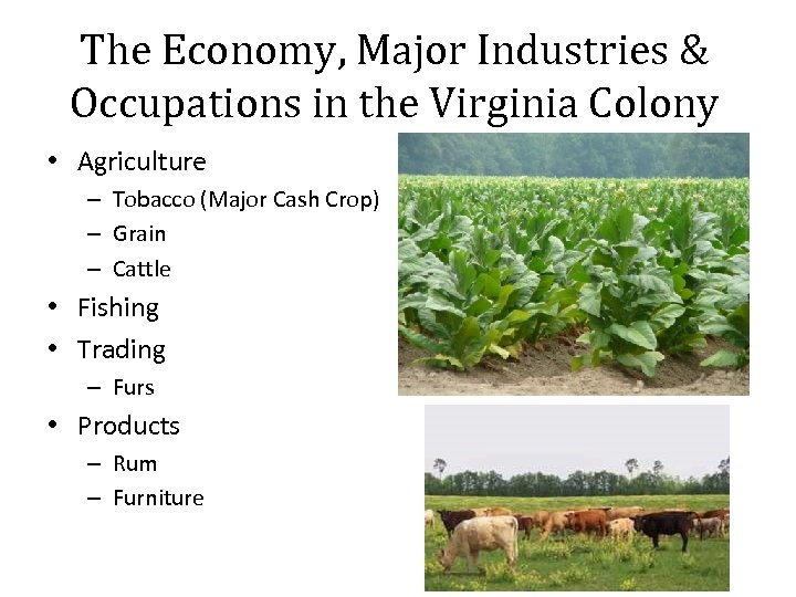 The Economy, Major Industries & Occupations in the Virginia Colony • Agriculture – Tobacco