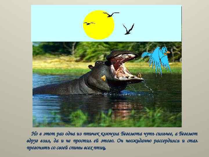 Но в этот раз одна из птичек клюнула Бегемота чуть сильнее, а Бегемот вдруг