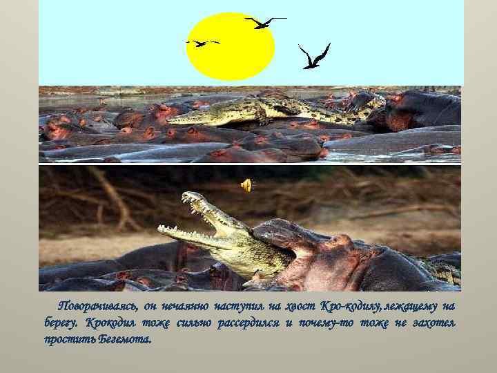Поворачиваясь, он нечаянно наступил на хвост Кро кодилу, лежащему на берегу. Крокодил тоже сильно