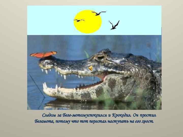 Следом за Беге мотомуспокоился и Крокодил. Он простил Бегемота, потому что тот перестал наступать