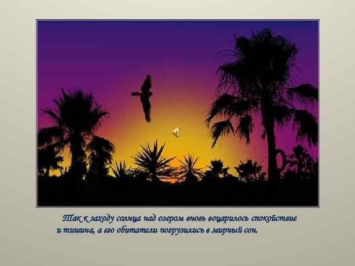 Так к заходу солнца над озером вновь воцарилось спокойствие и тишина, а его обитатели