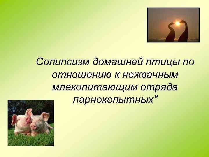 Солипсизм домашней птицы по отношению к нежвачным млекопитающим отряда парнокопытных