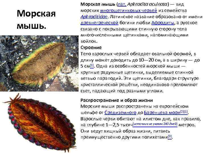 Биология. Азы.: Тип Кольчатые черви | 540x720