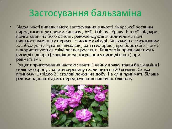 Застосування бальзаміна • Відомі часті випадки його застосування в якості лікарської рослини народними