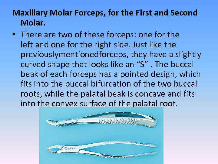Maxillary Molar Forceps, for the First and Second Molar. • There are two of