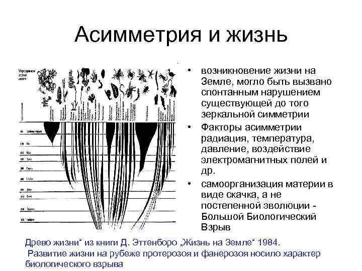 Асимметрия и жизнь • возникновение жизни на Земле, могло быть вызвано спонтанным нарушением существующей