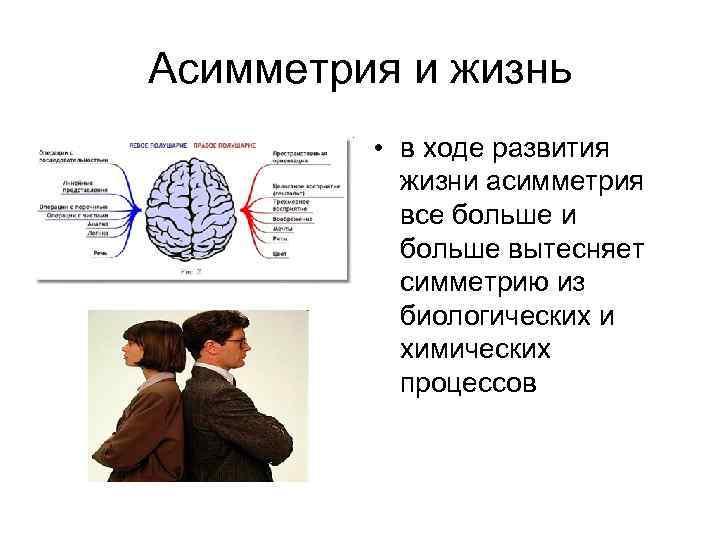 Асимметрия и жизнь • в ходе развития жизни асимметрия все больше и больше вытесняет