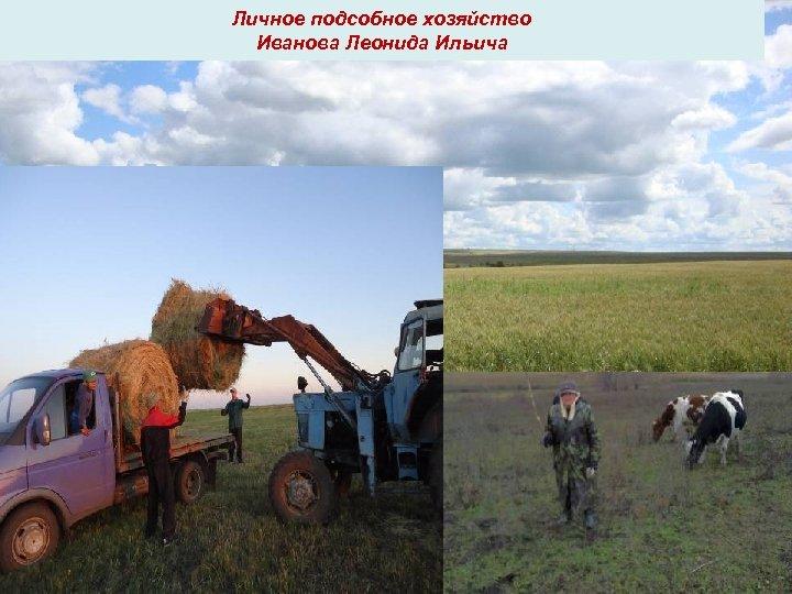 Личное подсобное хозяйство Иванова Леонида Ильича