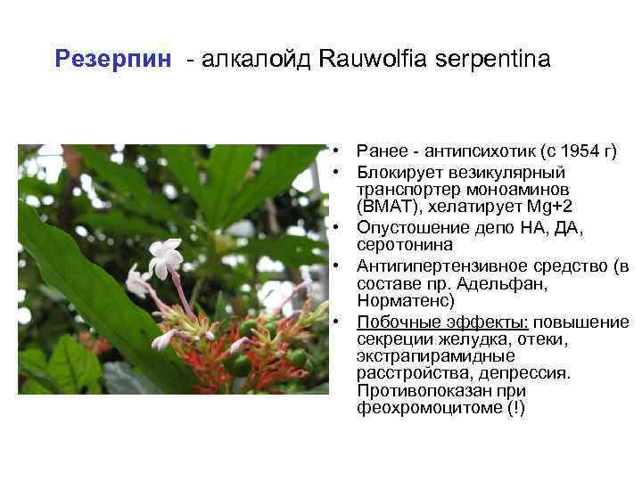 Резерпин - алкалойд Rauwolfia serpentina • Ранее - антипсихотик (с 1954 г) • Блокирует