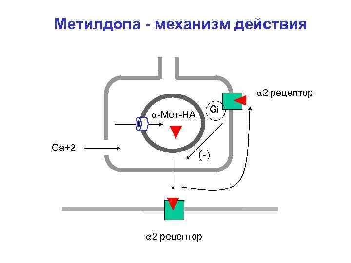 Метилдопа - механизм действия 2 рецептор Gi -Мет-НА Ca+2 (-) 2 рецептор
