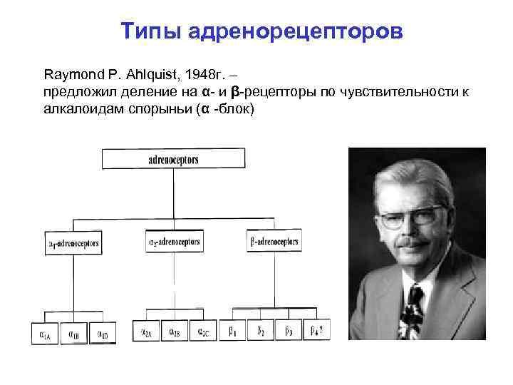 Типы адренорецепторов Raymond P. Ahlquist, 1948 г. – предложил деление на α- и β-рецепторы