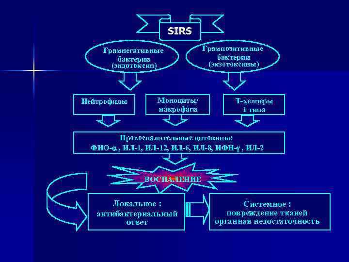 SIRS Грамнегативные бактерии (эндотоксин) Нейтрофилы Моноциты/ макрофаги Грампозитивные бактерии (экзотоксины) Т-хелперы 1 типа Провоспалительные
