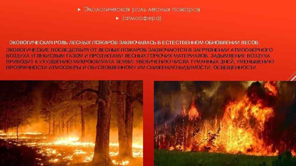 Экологическая роль лесных пожаров (атмосфера) ЭКОЛОГИЧЕСКАЯ РОЛЬ ЛЕСНЫХ ПОЖАРОВ ЗАКЛЮЧАЛАСЬ В ЕСТЕСТВЕННОМ ОБНОВЛЕНИИ