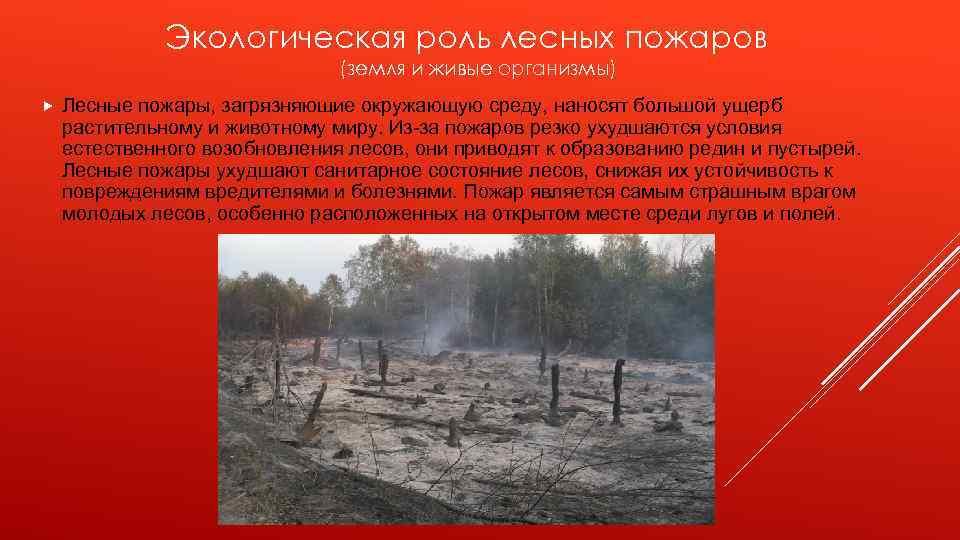 Экологическая роль лесных пожаров (земля и живые организмы) Лесные пожары, загрязняющие окружающую среду, наносят