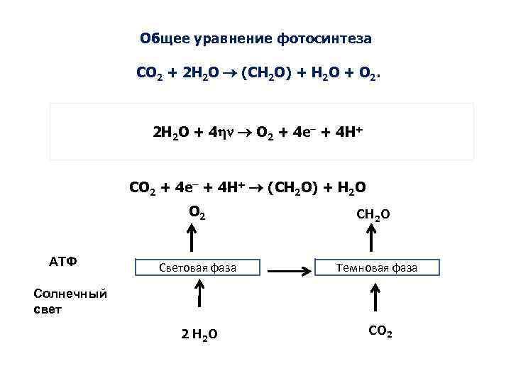 выбор проектов формула фотосинтеза у растений введению препаратов
