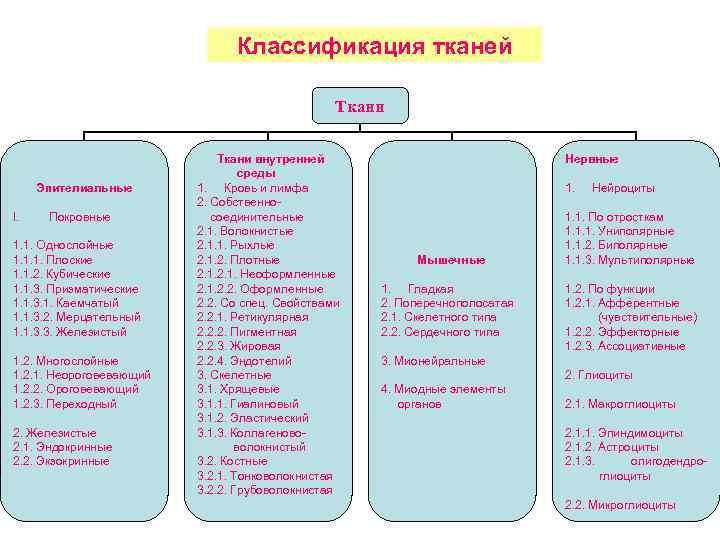Классификация тканей Ткани Эпителиальные I. Покровные 1. 1. Однослойные 1. 1. 1. Плоские 1.
