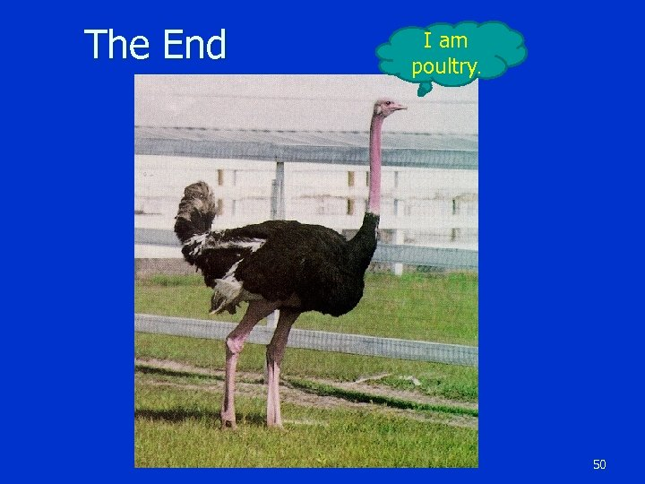 The End I am poultry. 50