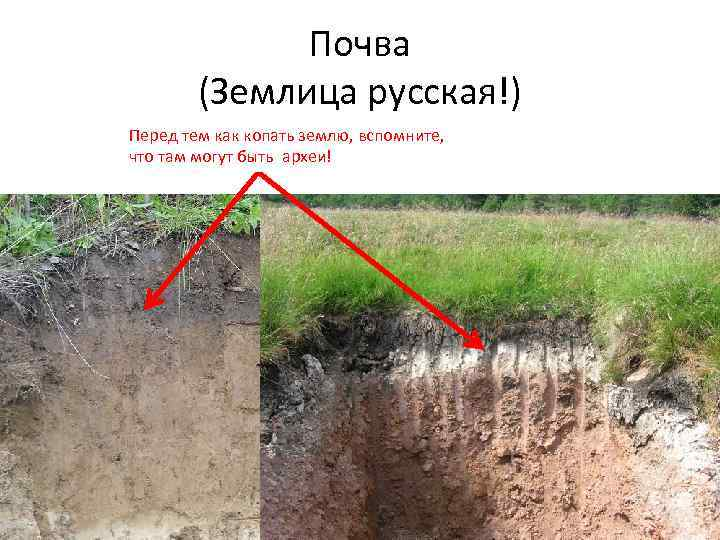 Почва (Землица русская!) Перед тем как копать землю, вспомните, что там могут быть археи!