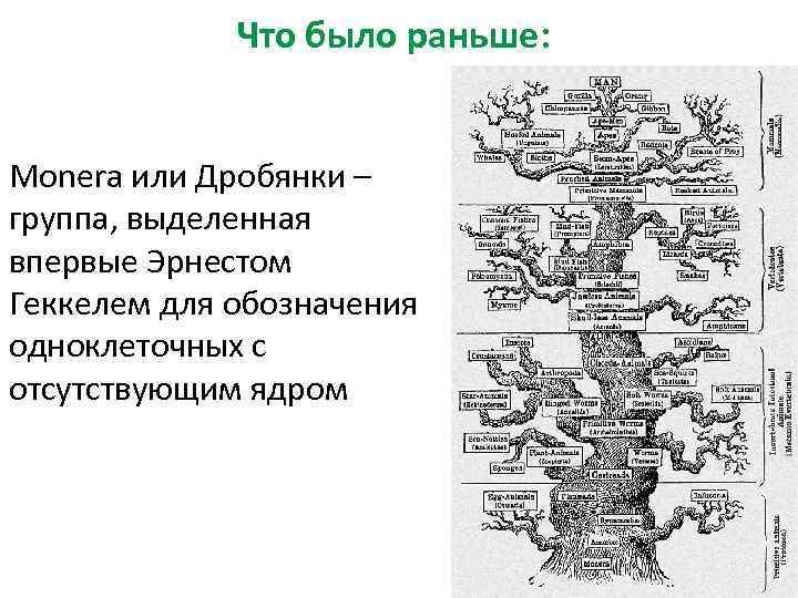 Что было раньше: Monera или Дробянки – группа, выделенная впервые Эрнестом Геккелем для обозначения