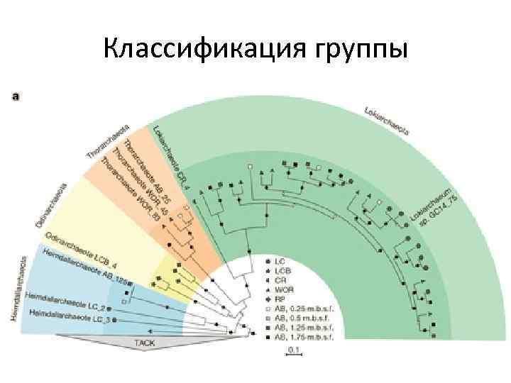 Классификация группы