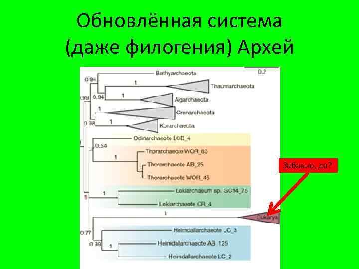 Обновлённая система (даже филогения) Архей Забавно, да?