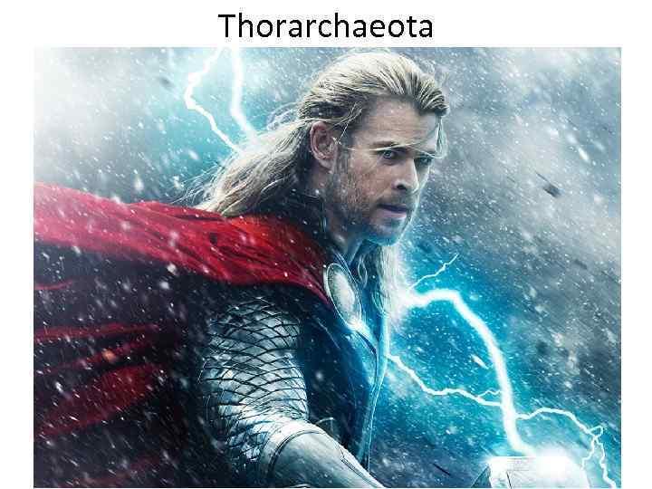 Thorarchaeota