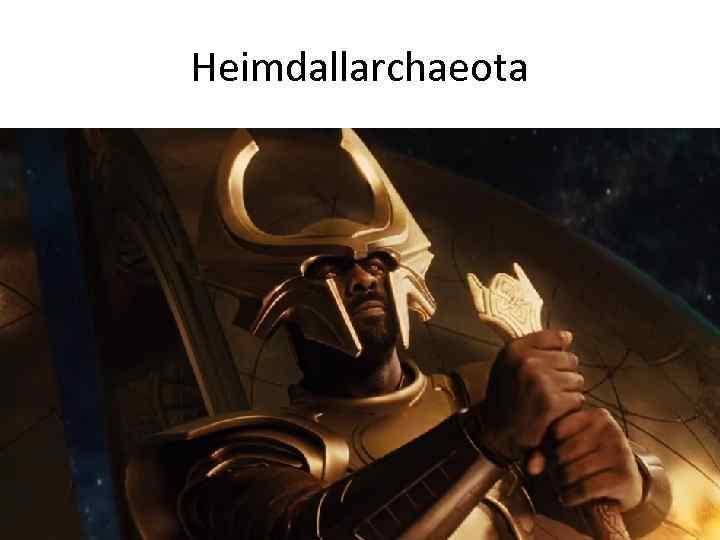 Heimdallarchaeota