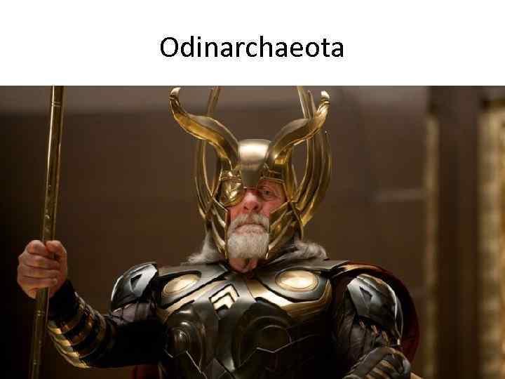 Odinarchaeota