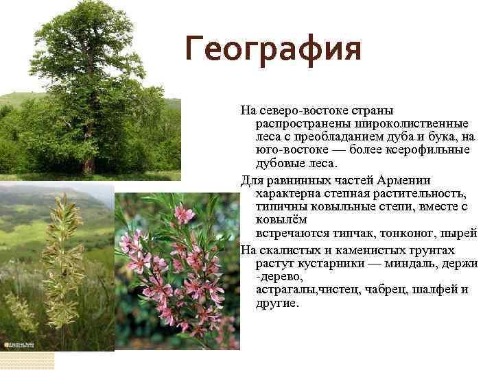 География На северо-востоке страны распространены широколиственные леса с преобладанием дуба и бука, на юго-востоке