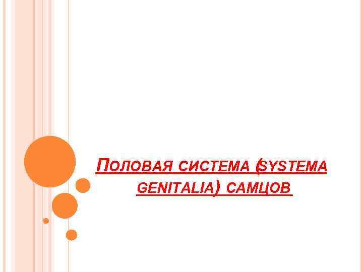 ПОЛОВАЯ СИСТЕМА (SYSTEMA GENITALIA) САМЦОВ