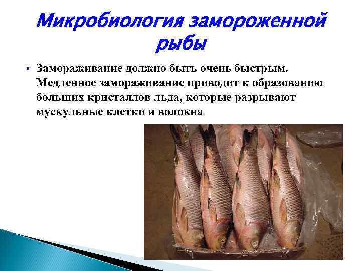 В теплых морях значительная часть ее является мезофильными микроорганизмами, в умеренных и холодных регионах преобладают психрофильные микроорганизмы.