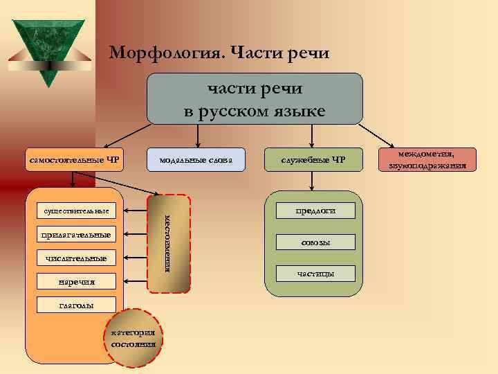 Морфология. Части речи части речи в русском языке самостоятельные ЧР модальные слова существительные числительные