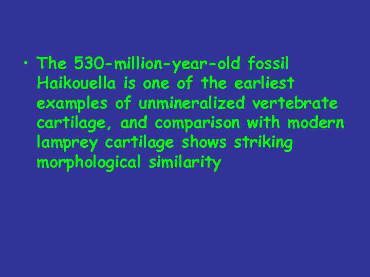 • The 530 -million-year-old fossil Haikouella is one of the earliest examples of