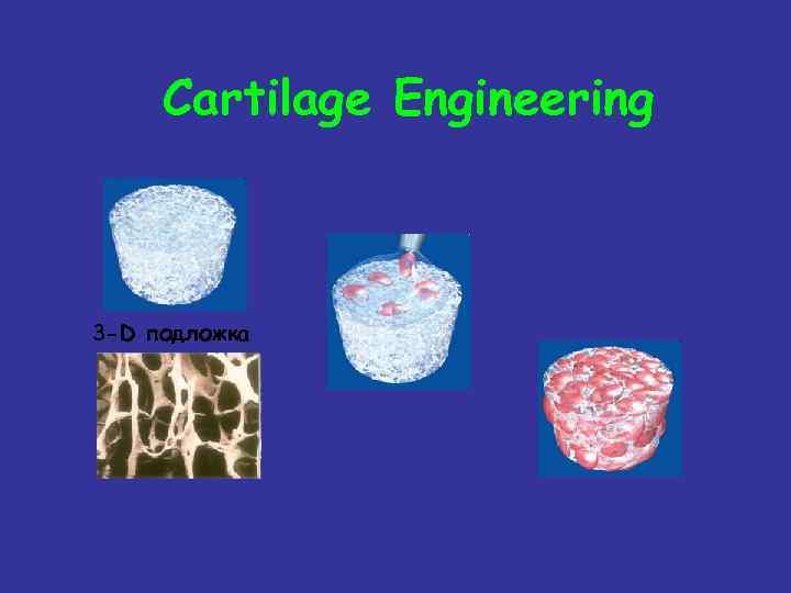 Cartilage Engineering 3 -D подложка