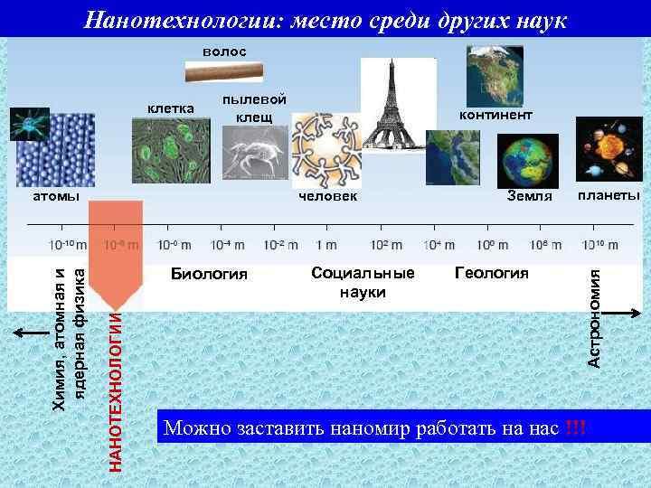 Нанотехнологии: место среди других наук волос пылевой клещ человек Биология НАНОТЕХНОЛОГИИ Химия, атомная и