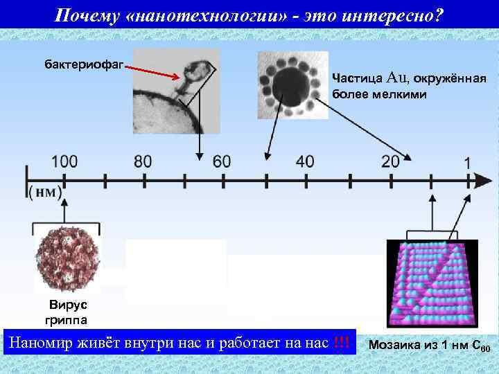 Почему «нанотехнологии» - это интересно? бактериофаг Частица Au, окружённая более мелкими Вирус гриппа Наномир