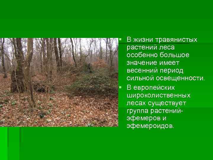 § В жизни травянистых растений леса особенно большое значение имеет весенний период сильной освещенности.