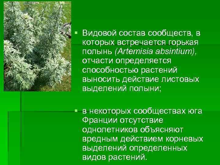 § Видовой состав сообществ, в которых встречается горькая полынь (Artemisia absintium), отчасти определяется способностью