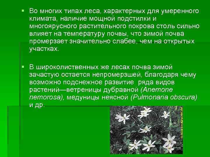 § Во многих типах леса, характерных для умеренного климата, наличие мощной подстилки и многоярусного