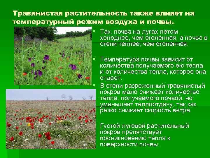 Травянистая растительность также влияет на температурный режим воздуха и почвы. § Так, почва на