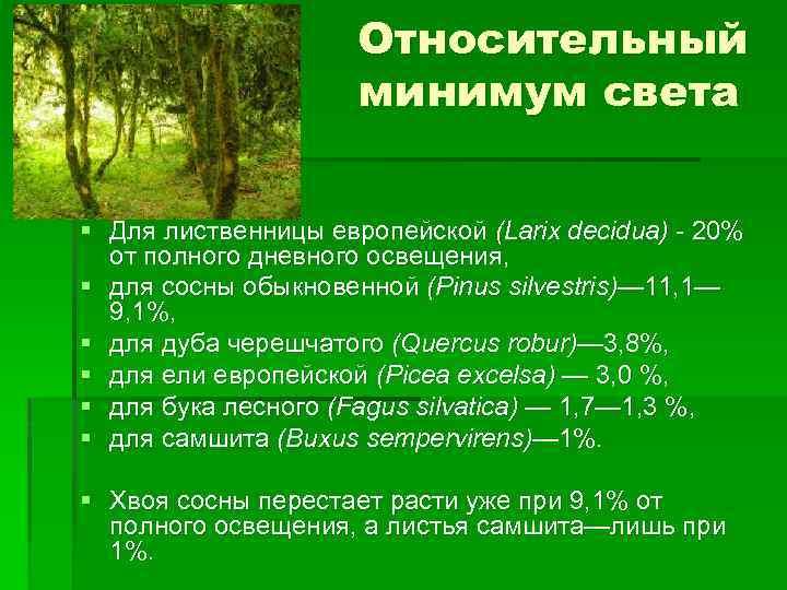 Относительный минимум света § Для лиственницы европейской (Larix decidua) 20% от полного дневного освещения,