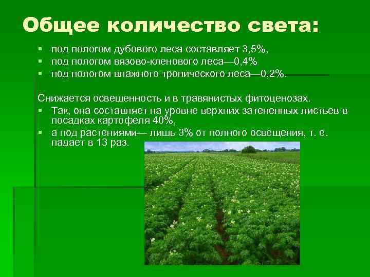 Общее количество света: § под пологом дубового леса составляет 3, 5%, § под пологом