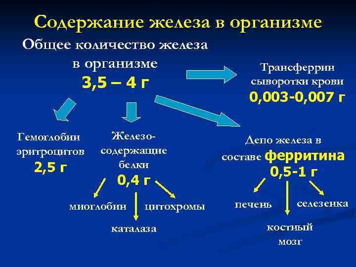 Содержание железа в организме Общее количество железа в организме 3, 5 – 4 г